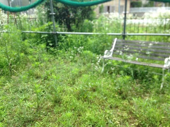 雑草が鬱蒼と生えた、人工芝を施工する前のお庭の写真
